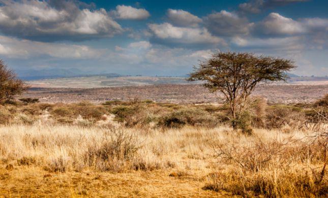 חם ויבש; רוחות, ערפל ואובך: תחזית מזג אוויר